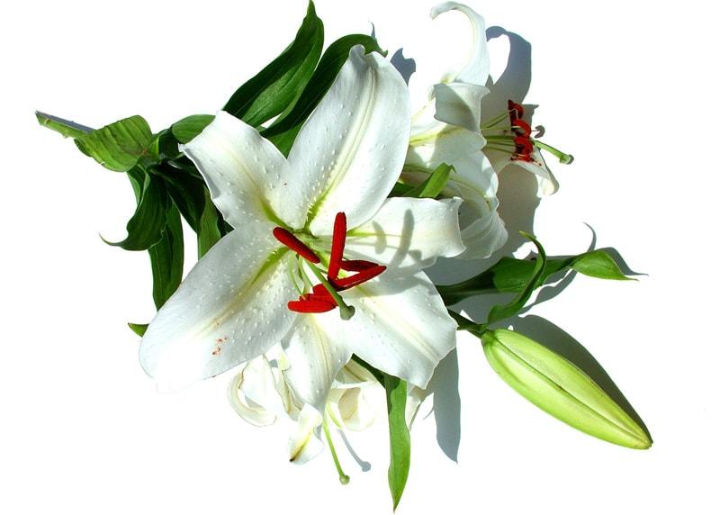 сколько цветов подарить девушке на первое свидание