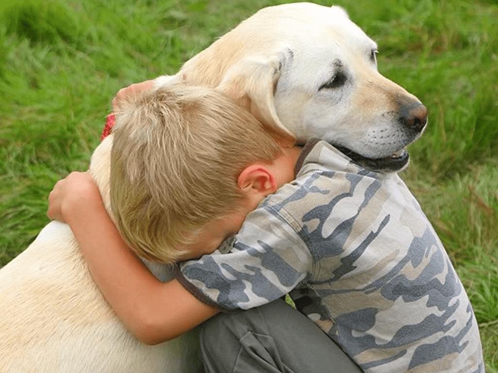 что делать если умерла собака