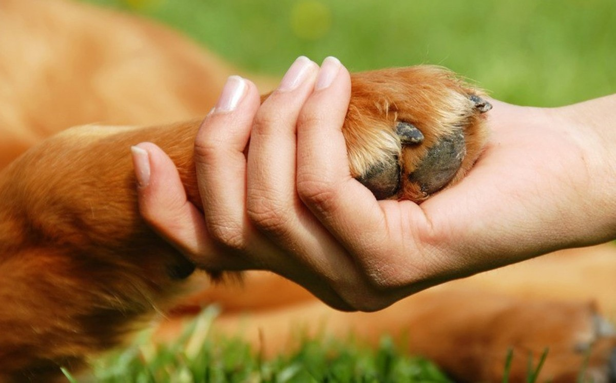 почему собаки уходят из дома перед смертью